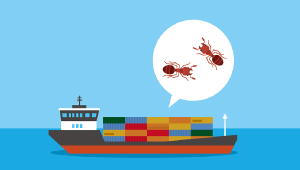 ヒアリの被害とその予防について